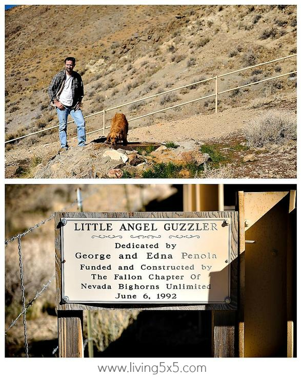 See what we captured while sheep watching at Little Angel, outside of Fallon, Nevada. It's a great getaway to see and do things you've never done.
