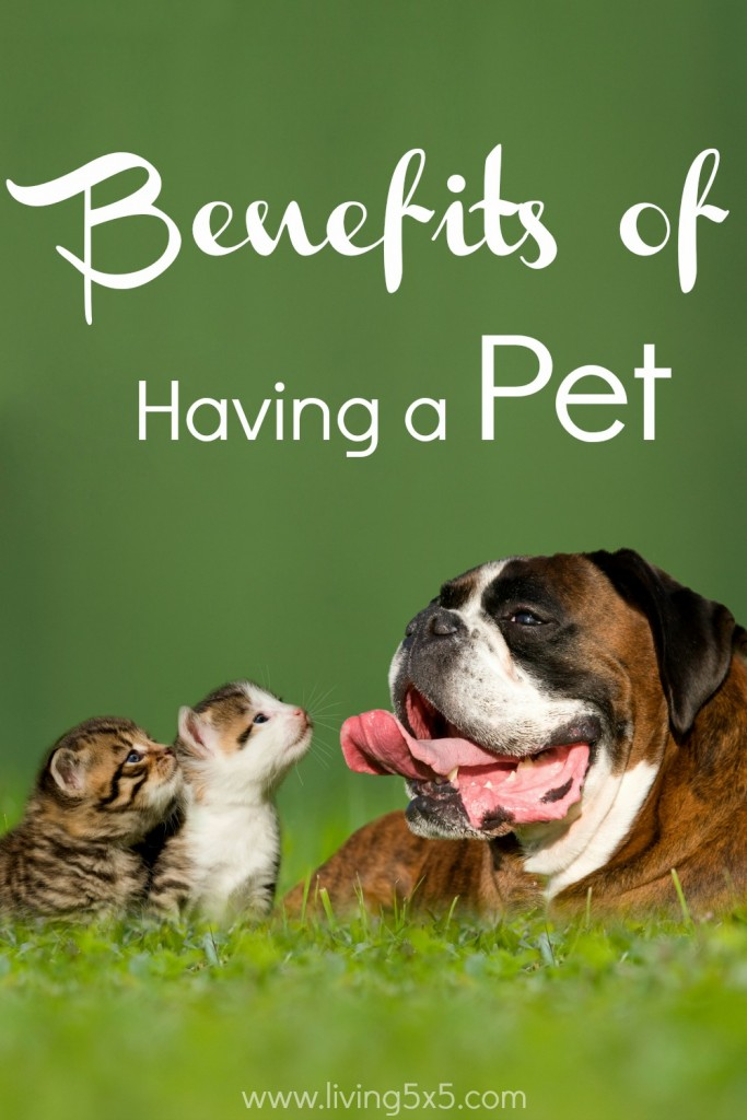Studies have shown that owning a pet improves your overall health. Learn the benefits of having a pet, and you'll be adding another member to the family!