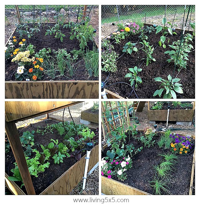 This week is all about planting a garden: building garden beds, adding irrigation, and getting the planting done. Anyone can plant a garden!